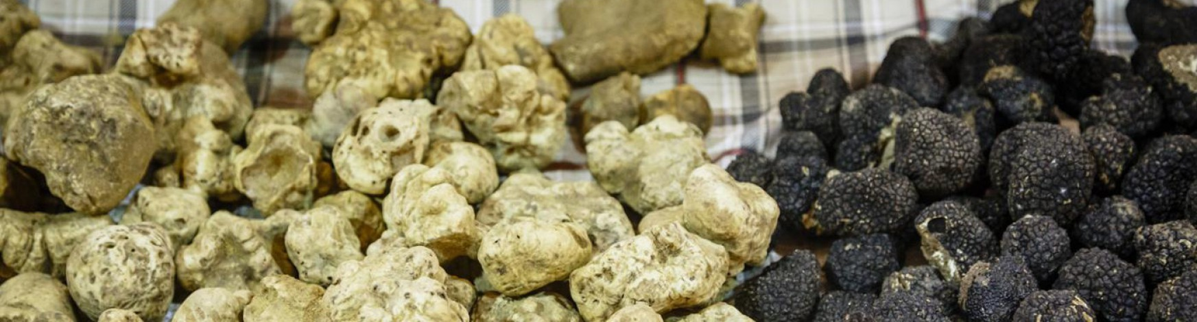 black-white-truffle